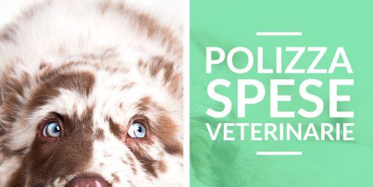 Assicurazione Sanitaria cane