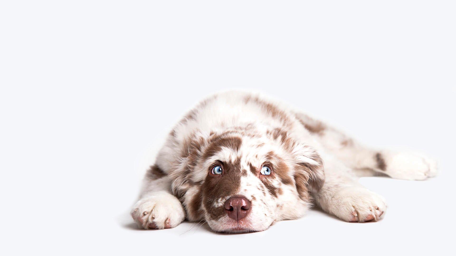 Domande Al Veterinario Cane assicurazione sanitaria cane gidass – sigma studi assicurativi